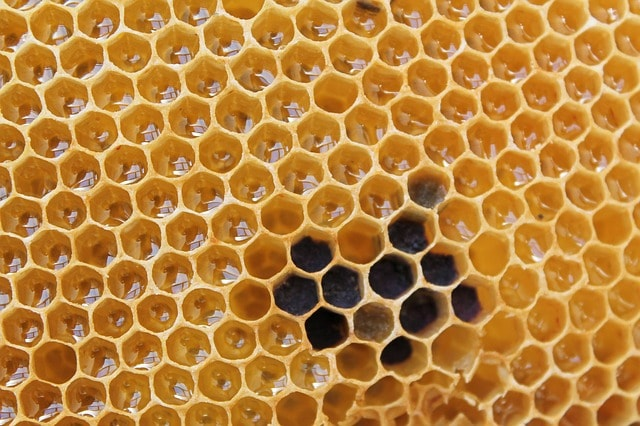 Пчелиные соты меда